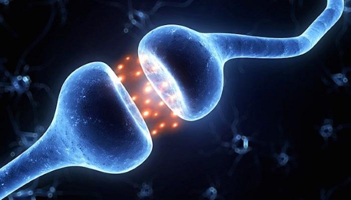 Характеристика анандамид стимулированных каннабиноидных рецепторов в человеческой миометрии гладкомышечных клеток