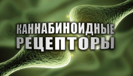 cannabinoid-receptors-title