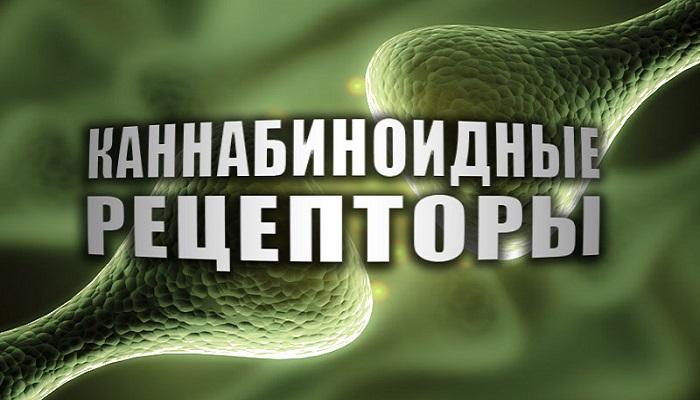 Рецепторы каннабиноидов