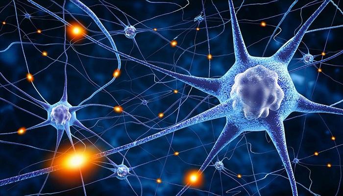 Как каннабиноиды повреждают нейронные сигналы