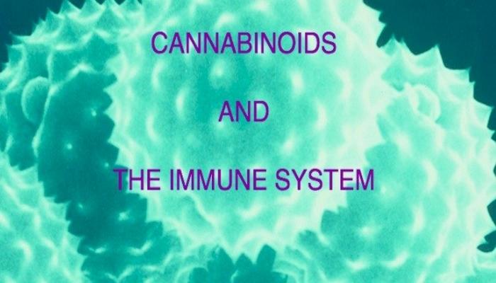 Каннабиноиды и иммунная система. Часть 6