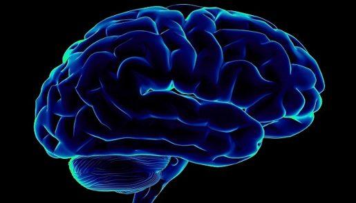 kannabinoidy-mozg
