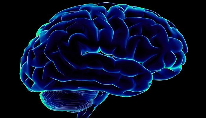 Каннабиноидные рецепторы и функции мозга (часть 1)