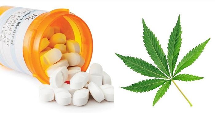 Конопля, как дополнение или замена опиатов при лечении хронической боли