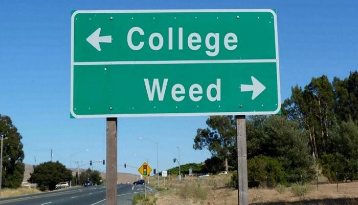 Медицинская марихуана должна быть предоставлена в университетских городках Коннектикута