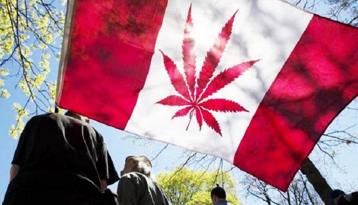 Исправить в Британской Колумбии «проблемы наркотиков» очень просто — легализовать марихуану!