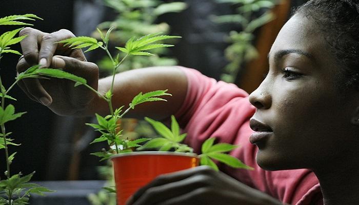 Сторонники медицинской марихуаны в Лос-Анджелесе