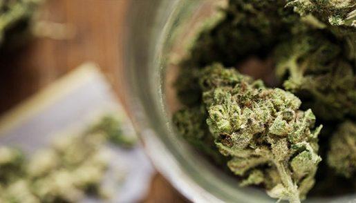 marijuana-volchanka