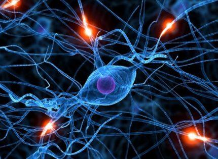 Конопля и нейропротекция.