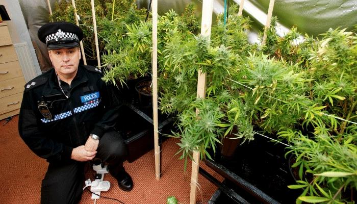 Комиссия Великобритании призывает к декриминализации хранения наркотиков и выращивания марихуаны