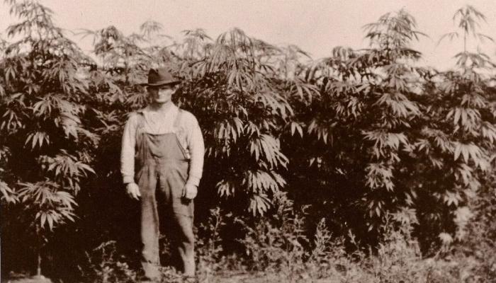 История марихуаны в Америке: Ранние годы