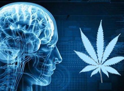 Медицинский каннабис защищает мозг.