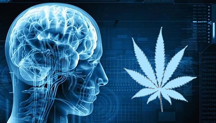 Медицинский каннабис защищает мозг