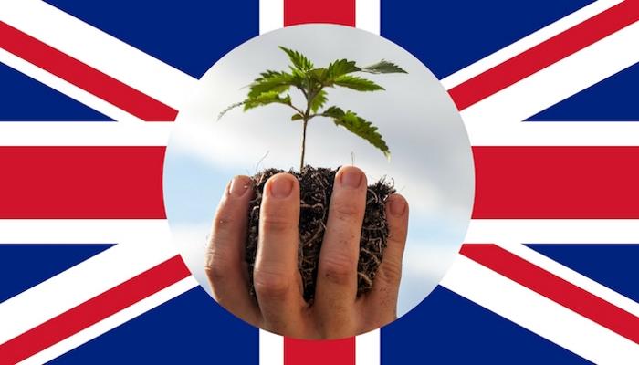 Британское исследование медицинской марихуаны