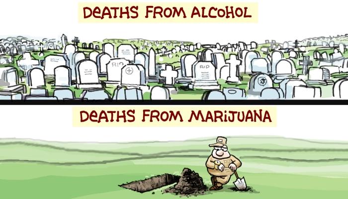 Легализация медицинского каннабиса уменьшает смертность.