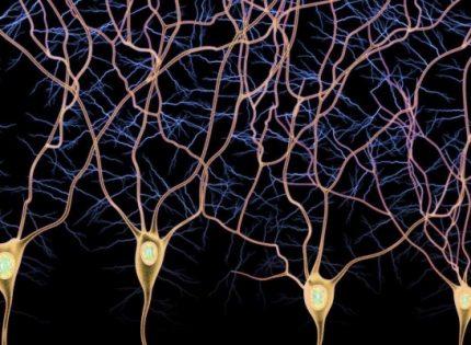 Рецепторные взаимодействия нейронов с энддоканнабиноидами.