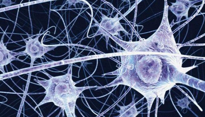 Молекулярная организация сигнализации эндоканнабиноидов в развивающихся нейронах