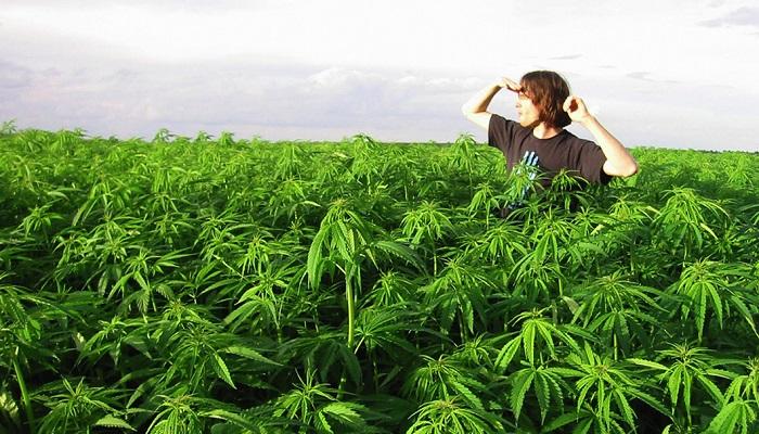 Поправка 64 по регулированию марихуаны завоевывает поддержку в Колорадо