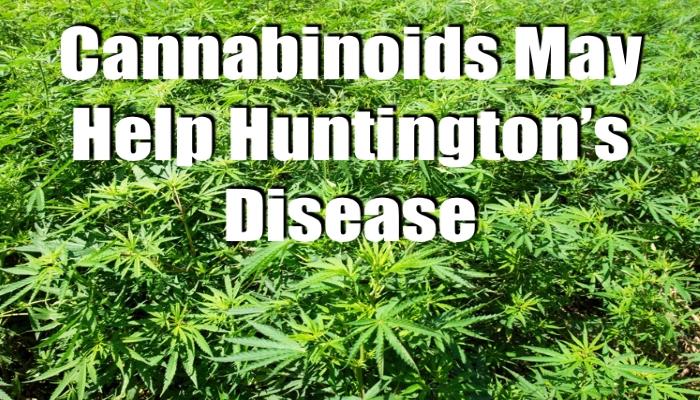 Каннабидиол и болезнь Гентингтона