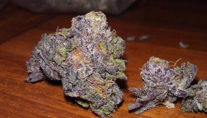 Описание сорта Grape Ape