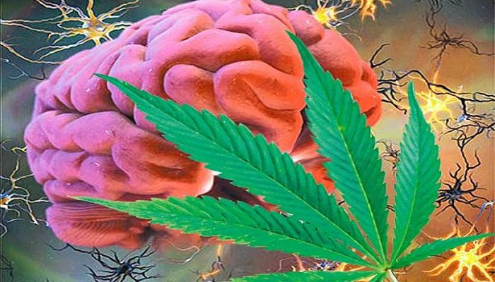 Компания Nuvilex сосредоточилась на развитии препаратов для лечения рака мозга на основе марихуаны