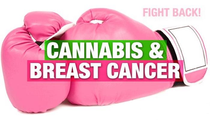 Синтетические агонисты каннабиноидных рецепторов ингибируют рост опухоли и метастазирование рака молочной железы