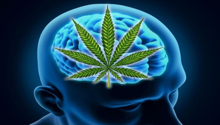 Марихуана может улучшать выносливость и омолаживать мозг