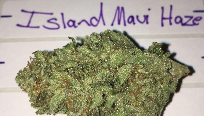 Описание сорта Island Maui Haze