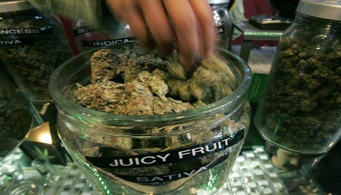 Описание сорта Juicy Fruit