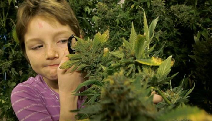 Новые опасности детства: медицинская марихуана