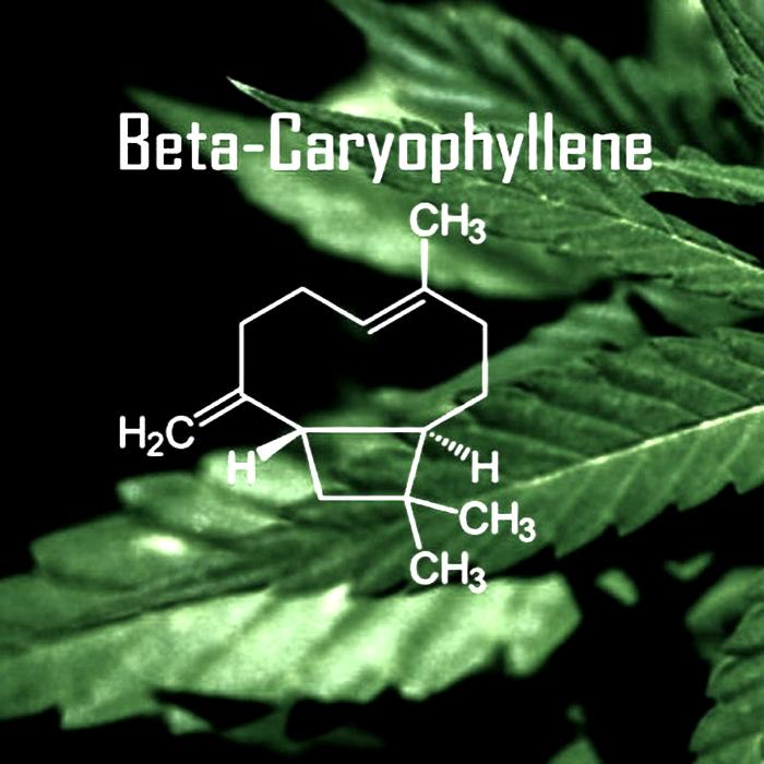 marijuana, cannabis, caryophyllene, beta-caryophyllene,