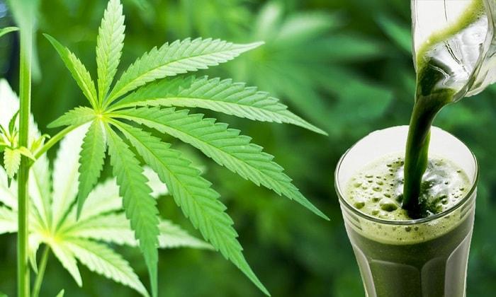 Удивительная польза для здоровья сока сырых листьев конопли