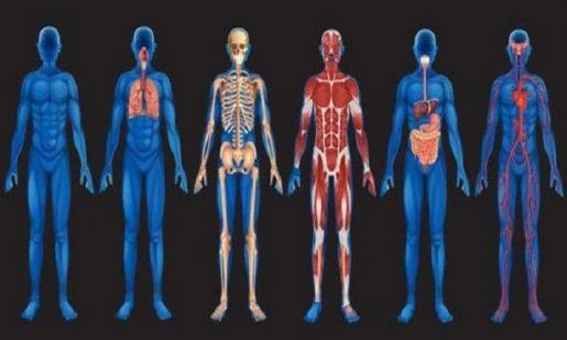 влияние конопли на организм человека
