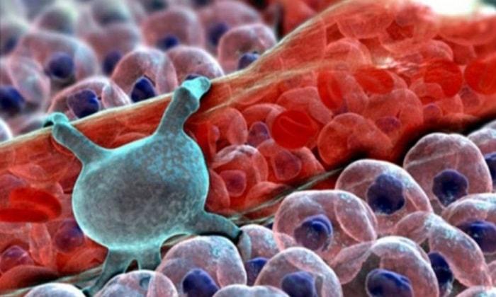 Клетки мозга, рак легких, и болезнь Лу Герига