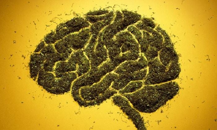 Марихуана защищает мозг