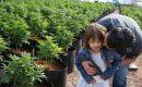 Медицинская конопля подарила жизнь маленькой девочке