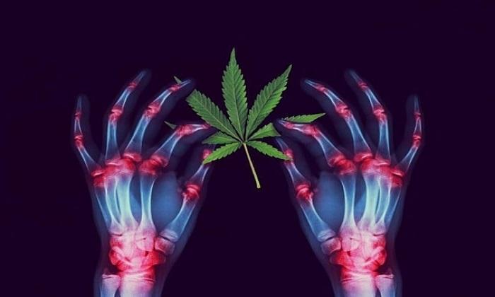 КБД из конопли и марихуаны – в чем разница?