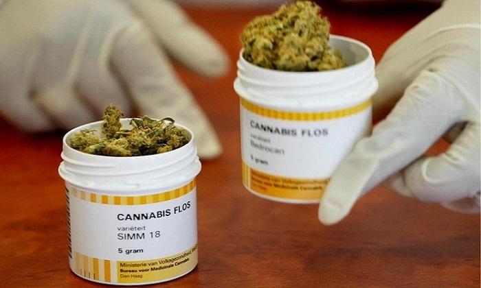 Исследования медицинской марихуаны