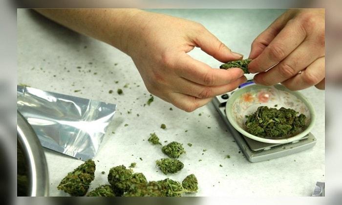 Как легальная марихуана превращается в многомиллионый бизнес