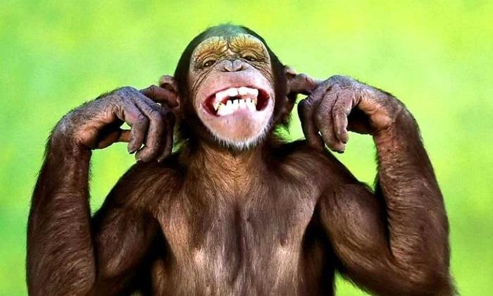 monkey seeds