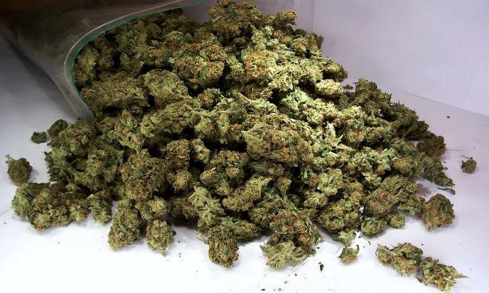 Польза марихуаны