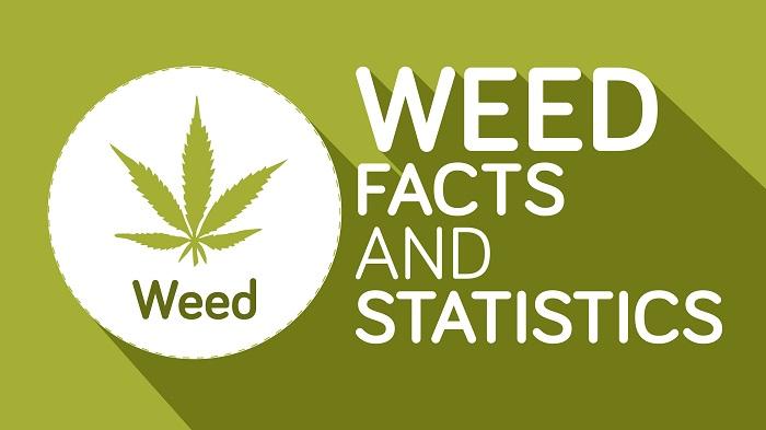 6 фактов о марихуане