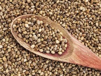 Польза семян конопли
