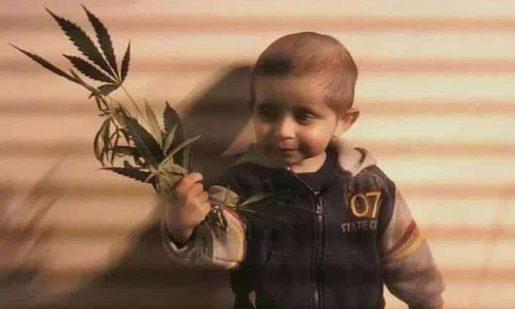 самый маленький потребитель марихуаны