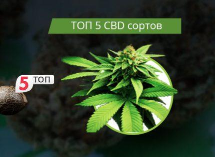 Топ-5 CBD-сортов 2018 года