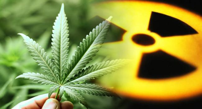 cannabis, weed,