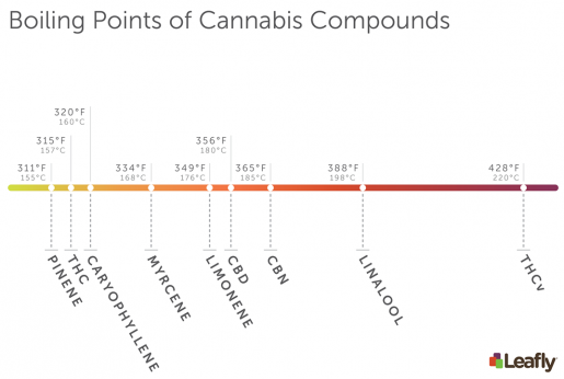body, cannabis