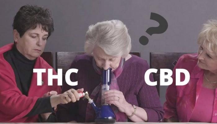 TГК или КБД: какое соединение марихуаны более полезно?