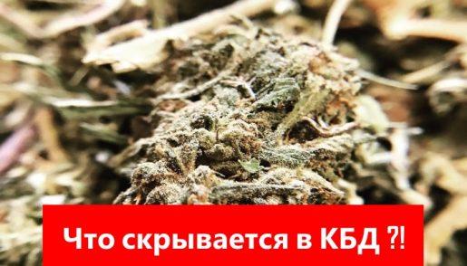 cbd, кбд, каннабидиол, что такое кбд, кбд это, всё о кбд, масло кбд это, что такое каннабидиол, каннабидиол это, каннабидиол масло, cannabidiol, cannabidiol to, and cannabidiol,of cannabidiol in, weed, марихуана, тгк, конопля, каннабис,
