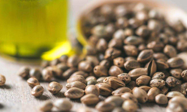 Семена конопли – максимальный источник Омега-3 жирных кислот для организма человека